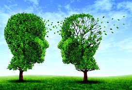 Day 8: Giving my brain foranalysis